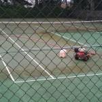 Démoussage nettoyage du terrain